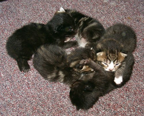 Tiny Pile of Kittens