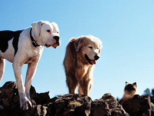 Dogs on Film: 7 of the Most Famous and Beloved Movie Dogs