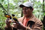 "Angel Paz, a native guide, holds a Black Chinned Mountain Tanager at his private reserve in Ecuador. Six months after the creation of his ""Peace of the Birds"" refuge, it has already attracted bird-watching enthusiasts from around the world"