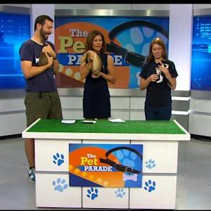 Pet Parade: MSPCA Angell In Centerville