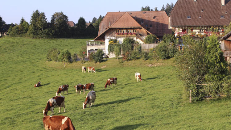 "In this photo taken Tuesday, Aug. 23, 2011, dairy cows graze on grass in the Emmental region of Switzerland. The Emmental Show Dairy cranked out 1.2 million pounds (550 metric tons) of cheese three years ago, but now makes a third less and might be forced to cut back to a few wheels a day _ just to show tourists. The strength of the Swiss franc is driving down profits in this Alpine nation, poking holes in the finances of making Emmental, popularly known as ""Swiss cheese"" in North America.  (AP Photo/Mark D. Carlson)"