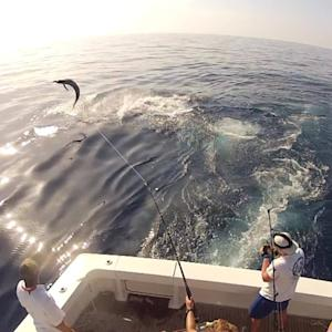 Acrobatic Blue Marlin on the Pipe Dream