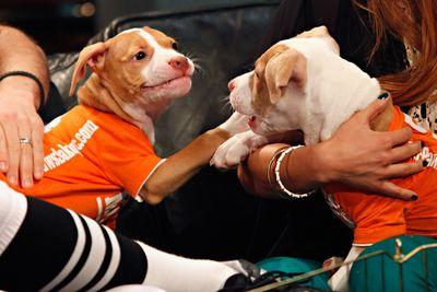 Puppy Bowl 2015 fantasy picks for serious fans