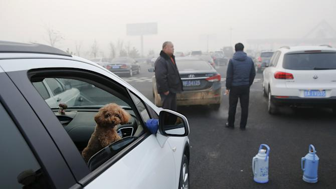 A dog peers from inside a car stranded on a highway between Beijing and Hebei province, China, that is closed due to smog on an extremely polluted day
