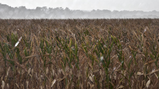 FILE - In this Wednesday, Aug. 8, 2012 file photo, a dry corn field receives some rain from a passing thunderstorm near Blair, Neb. Nearly 4 out of 5 Americans now think temperatures are rising and that global warming will be a serious problem for the United States if nothing is done about it, a new Associated Press-GfK poll finds. Belief and worry about climate change are inching up among Americans in general, but concern is growing faster among people who don't often trust scientists on the environment. In follow-up interviews, some of those doubters said they believe their own eyes as they've watched thermometers rise, New York City subway tunnels flood, polar ice melt and Midwestern farm fields dry up. (AP Photo/Nati Harnik, File)
