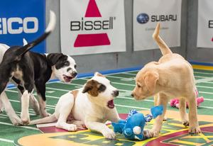 Puppy Bowl IX | Photo Credits: Keith Barraclough/Animal Planet