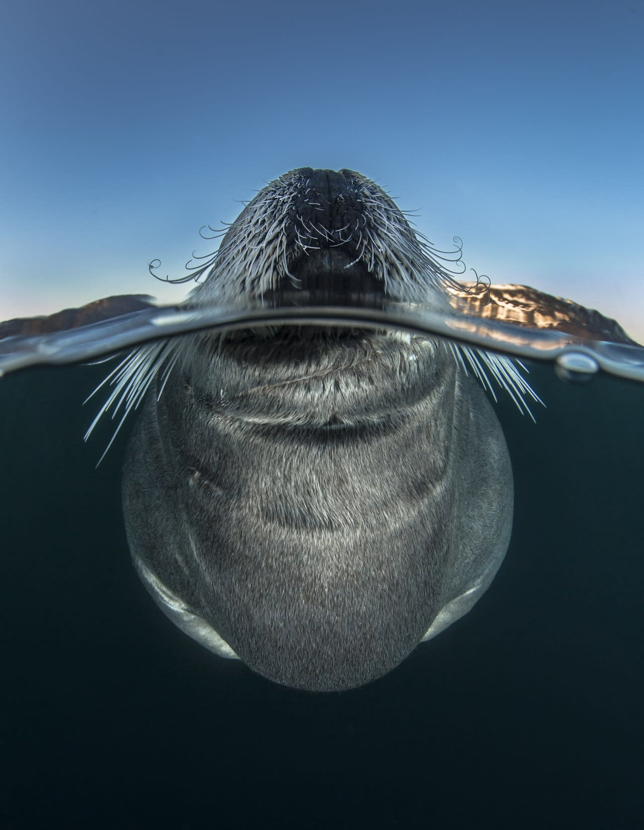 Photos: Highlights from the annual  Wildlife Photographer of the Year competition