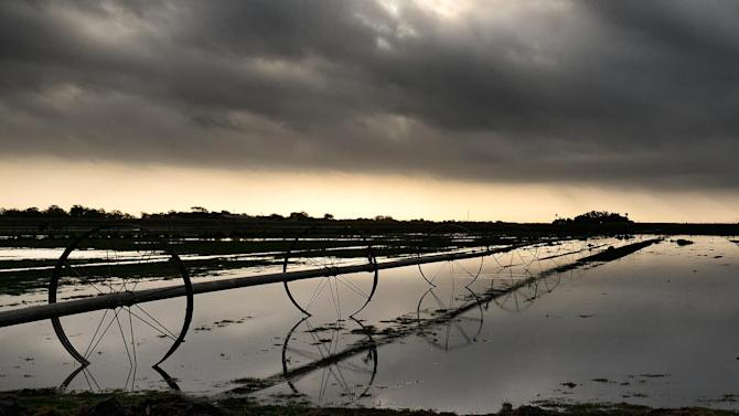Texas farmers facing 'total loss for this year'
