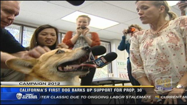 "California's ""first dog"" barks up support for Prop 30"