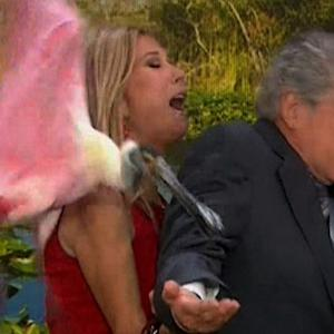 Regis and Kathie Lee Reunion Ruined By Birds