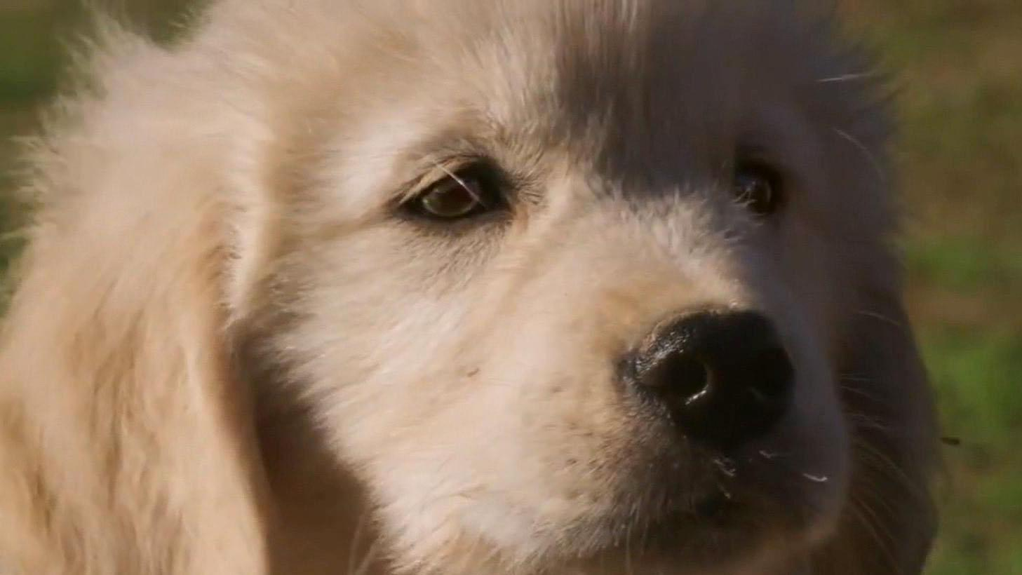 Super Bowl 2015 ads you have to see