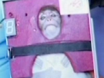Iran Says It Launched Monkey Into Space