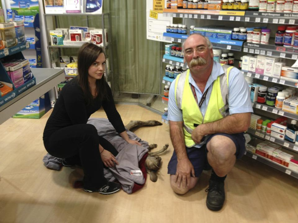 Handout picture of Wildlife Victoria volunteer Rountree and Fuller posing with a rescued kangaroo at Melbourne airport