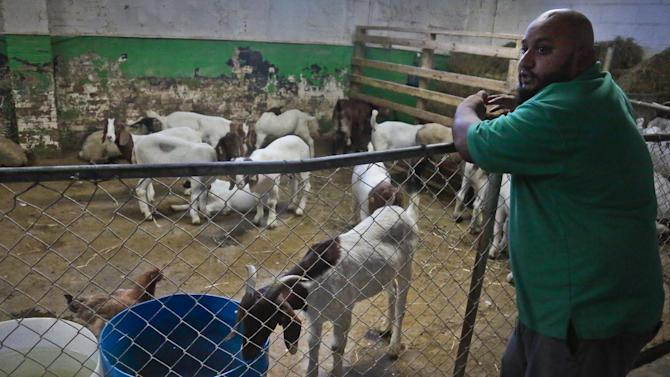 Imran Uddin, owner of Madani Halal live market, tours a section of his market housing goats and sheep, on Wednesday, Aug. 14, 2013 in the Queens Borough of New York. Uddin, who supplies some of the city's top chefs, said there has been no escapes from his facility into the public. (AP Photo/Bebeto Matthews)