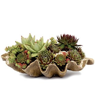 clamshell planter