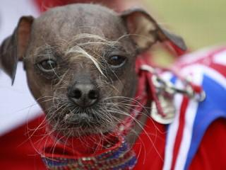 Mugly: Meet the World's Ugliest Dog
