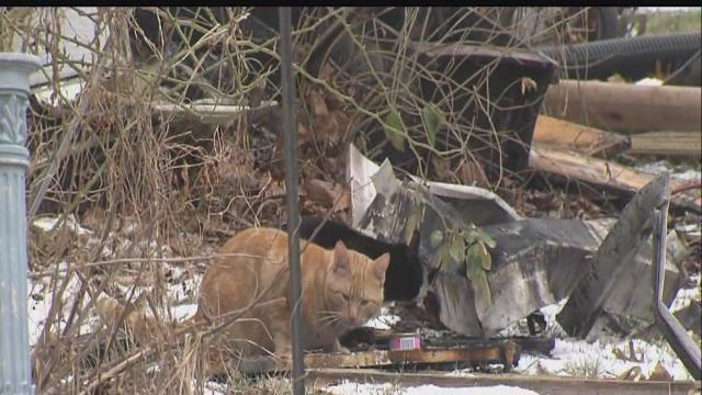 15 dogs, cats killed in Indianapolis house fire