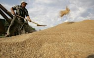 "<p>A farmer shovels grain in the village of Vasyurinskoe in southtern Russia. ""State-run capitalism, as established in Russia, limits the opportunities for future development and thus should be further liberalised,"" the World Economic Forum said in one of its most recent reports.</p>"