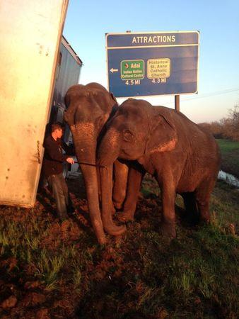 Heave, ho: Elephants rescue 18-wheeler stranded on Louisiana road