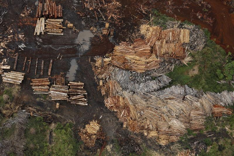 Brazilian exchange launches app to track illegal timber trade