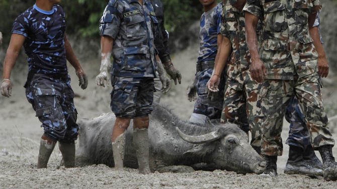 Nepalese rescuers try to pull a buffalo from the mud at a flood site at Kharapani village of Kaski district, about 200 kilometers (125 miles) west of Katmandu, Nepal, Sunday, May 6, 2012. Flash floods from the Seti river in western Nepal swept away dozens of people along with their cattle and houses, officials said. Bodies have been recovered, a police official said.(AP Photo/Niranjan Shrestha)