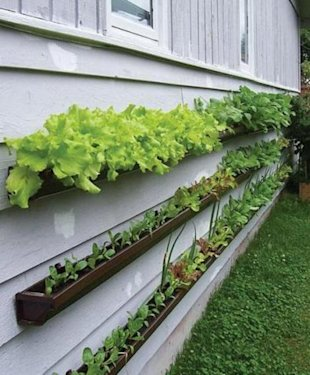 Turn Rain Gutters into Gardens