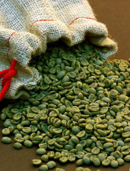 Is green coffee bean extract the answer to weight loss?