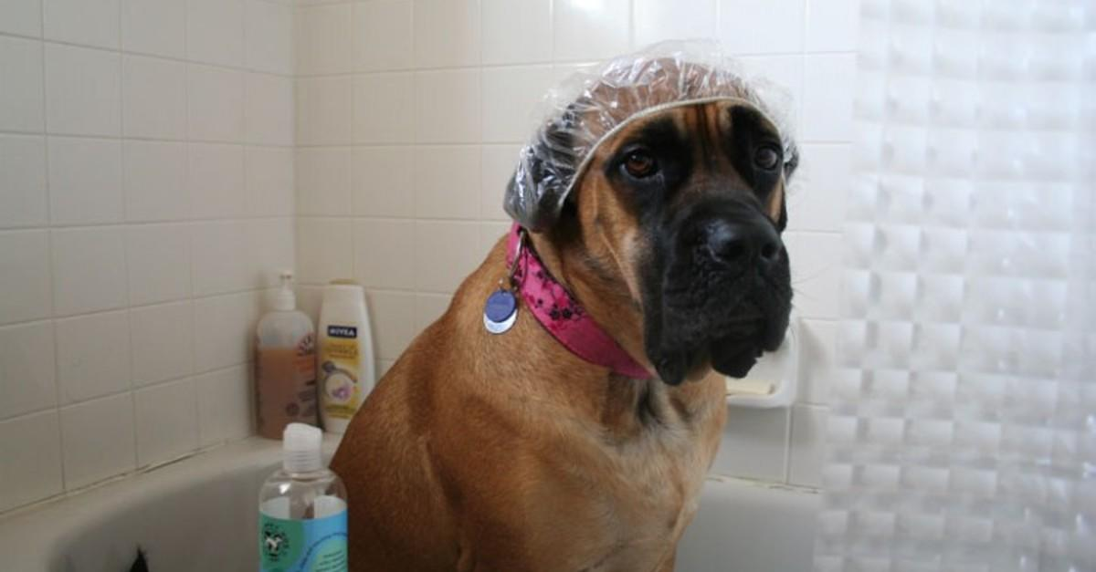 21 Dogs Share Their Deepest Shower Thoughts