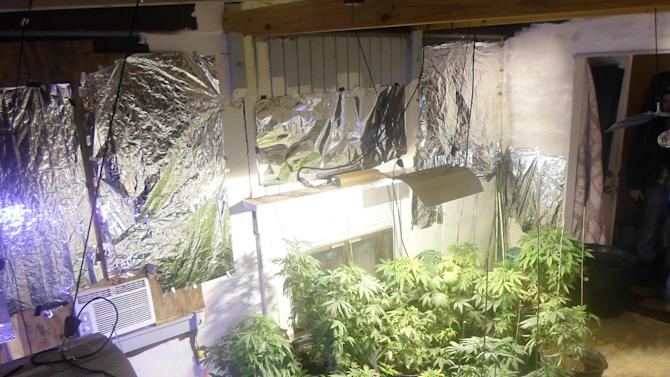 Marijuana plants found at the rented home of former fugitive Aubrey Lee Price in Marion County