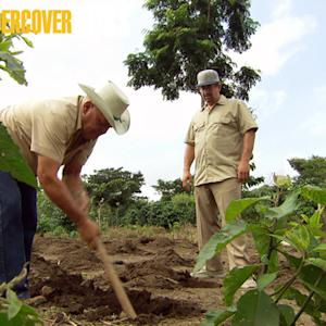 Undercover Boss - The Coffee Plantation