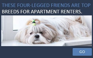 These four-legged friends are top breeds for apartment renters. copyright chaoss/Shutterstock.com