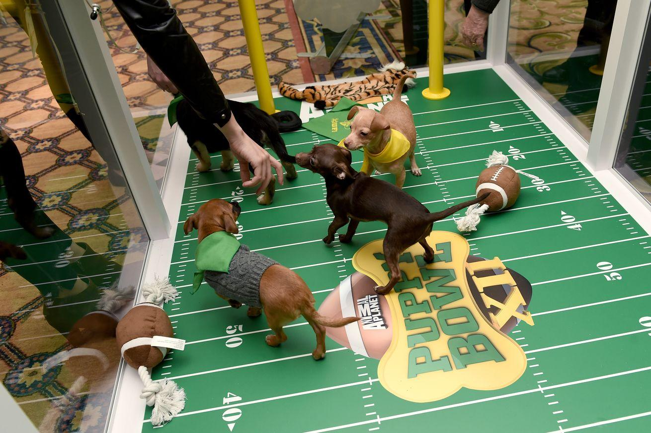 Puppy Bowl 2016 live stream: Time, TV schedule, lineups and how to watch online