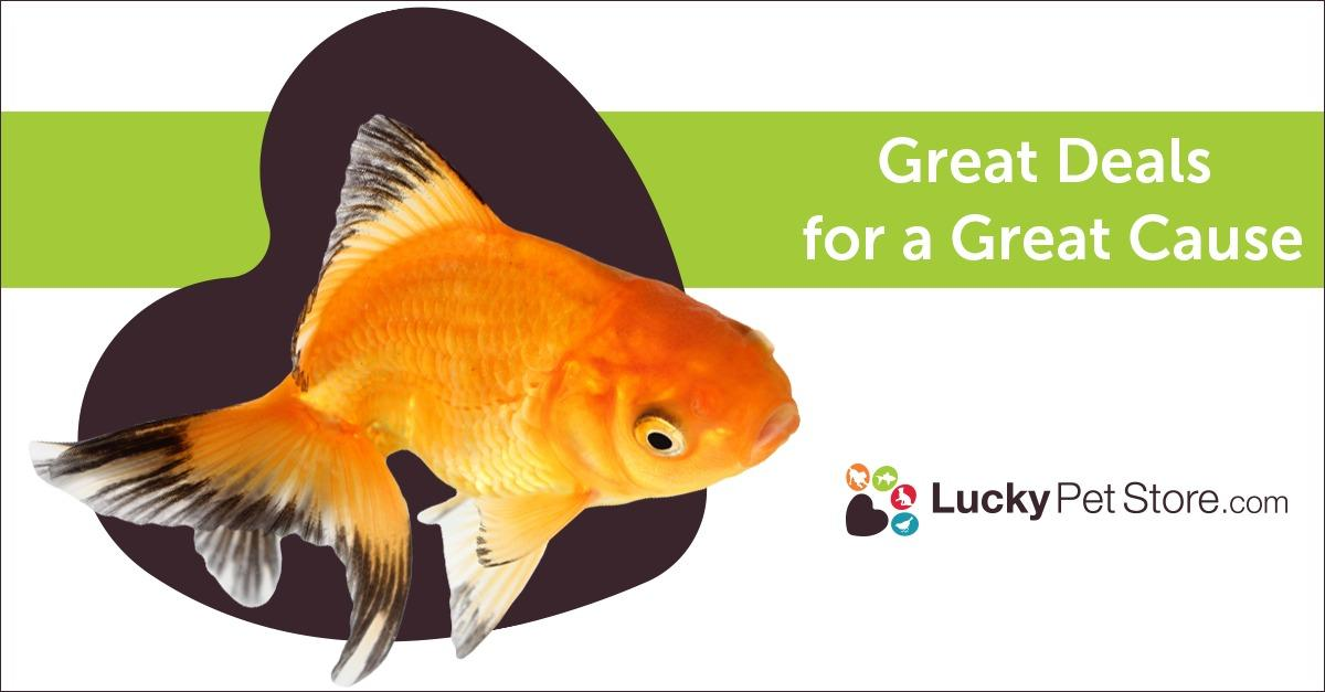 Need Fish Products at Bargain Prices?