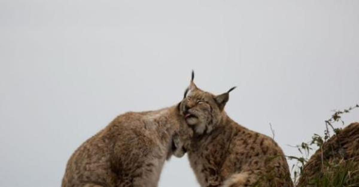 20 Animals That Define Relationship Goals