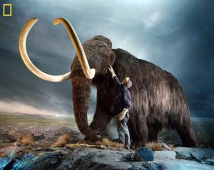 Humans Blamed for Extinction of Mammoths, Mastodons & Giant Sloths