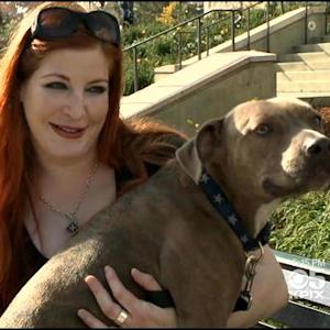 Woman, Support Dog Kicked Of Oakland Southwest Flight