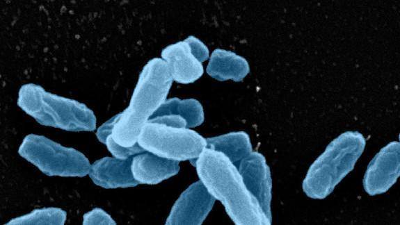 Soil Microbes Harbor Nasty Antibiotic Resistance Genes