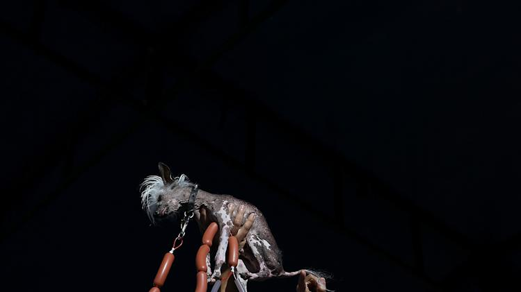 Annual Ugliest Dog Competition Held In Petaluma