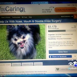 Owner & Rescue Group In 'Doggie Adoption Dilemma'