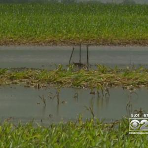 Heavy Rains Have Illinois Farmers Dealing With Soaked Crops
