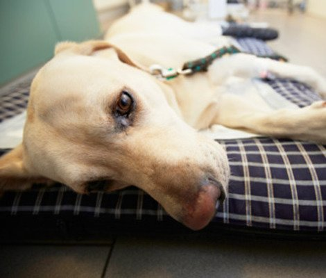 Attention Dog Owners: Be on Guard Against Giardia Pets - Yahoo Shine