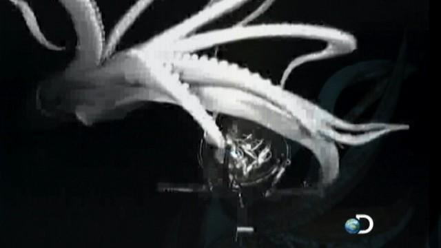 Giant Squid Caught on Tape for First Time