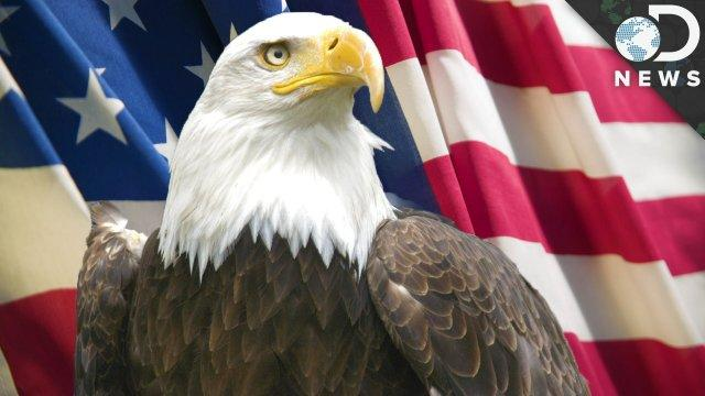 9 Facts You Didn't Know About Bald Eagles - DNews