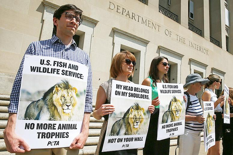 France's Ban on Lion Trophies Could Spread to United States, Say Wildlife Advocates