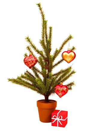 Potted Pine