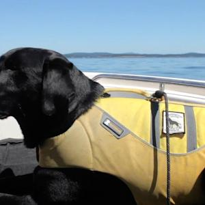 Service Dogs Sniff Out Whale Waste for Researchers