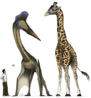 Jet-Size Pterosaurs Took Off from Prehistoric Runways