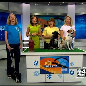 Pet Parade: Forever Home Rescue New England Of Medfield