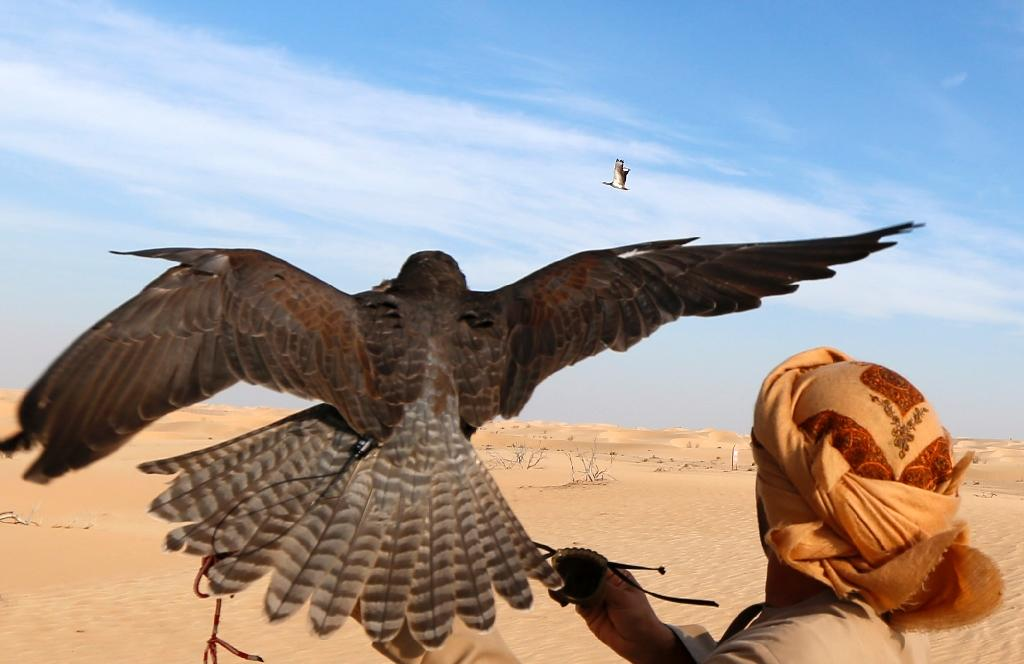 Spain dismantles falcon trafficking ring destined for UAE races