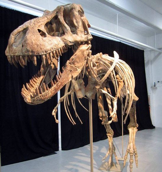 70 million-year-old Tyrannosaurus skeleton seized in New York ‎